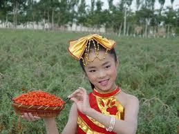 Fruct Goji